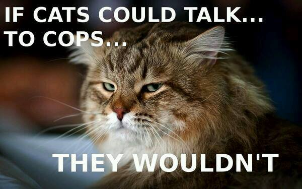 If CATs could talk… to cops… they wouldn't